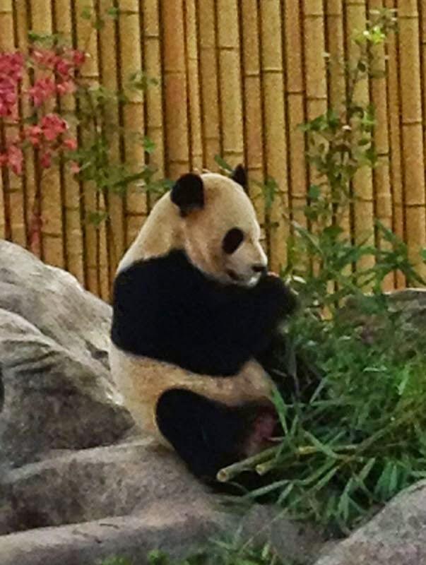 Toronto Hayvanat Bahçesi