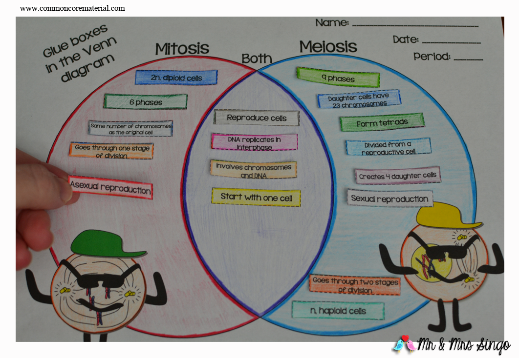 The best of teacher entrepreneurs mitosis vs meiosis this venn diagram is a great way for students to study and learn the differences between mitosis and meiosis ccuart Gallery
