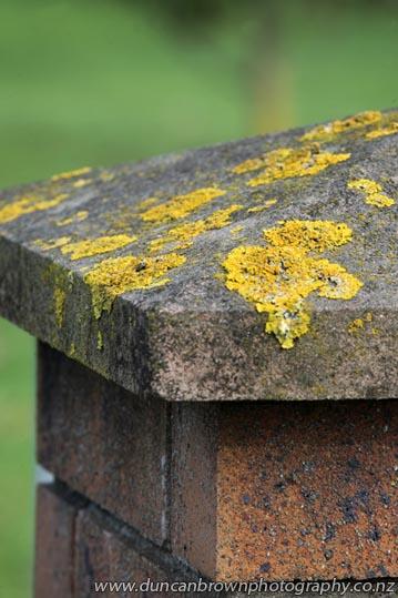 Likin' lichen - Pakowhai Rd, Hastings photograph