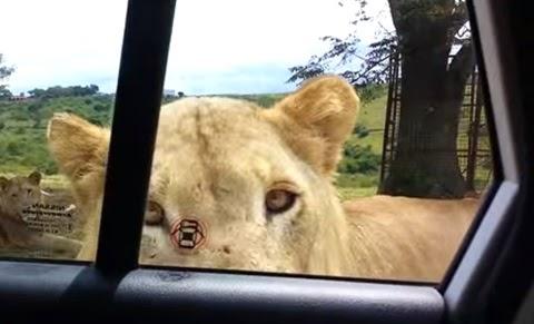 leona-ventana