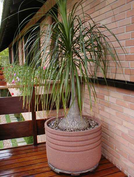 mini jardim quanto custa : mini jardim quanto custa:Mini Plants: Plantas fáceis de cuidar trazem verde para casa sem dar