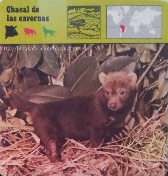 Blog Safari Club, el Chacal de las cavernas, uno de los cánidos menos conocidos