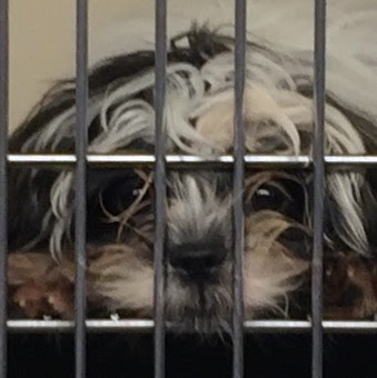 Sad Eyes, Pet Store Pooch Waits