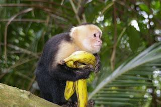 новогодние загадки о обезьяне для детей
