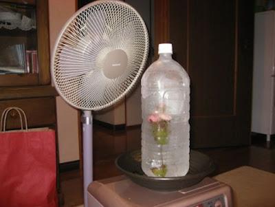 giảm nhiệt cho nhà