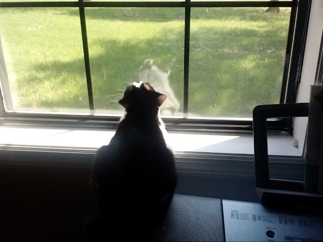 Wordless Wednesday: Fiona in her favorite spot, the front window