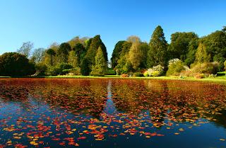 14 fotos hermosas del otoño   Hojas de colores (imagenes facebook )