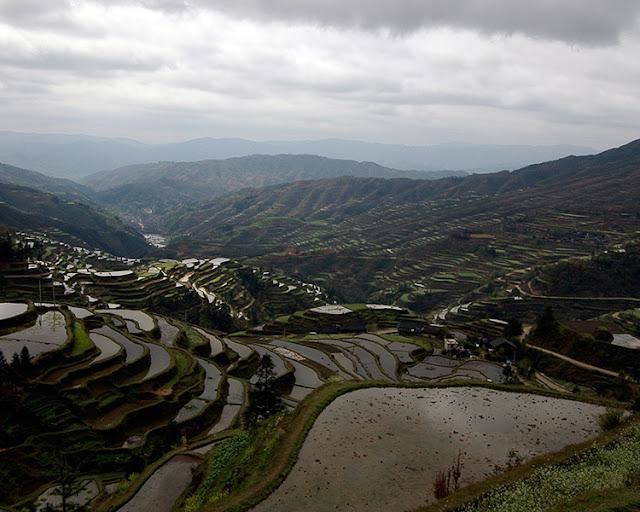 Terraced rice fields to Kaili, Guizhou.