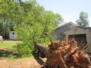Tree fell on My Moms House an hour ago 4.12.11