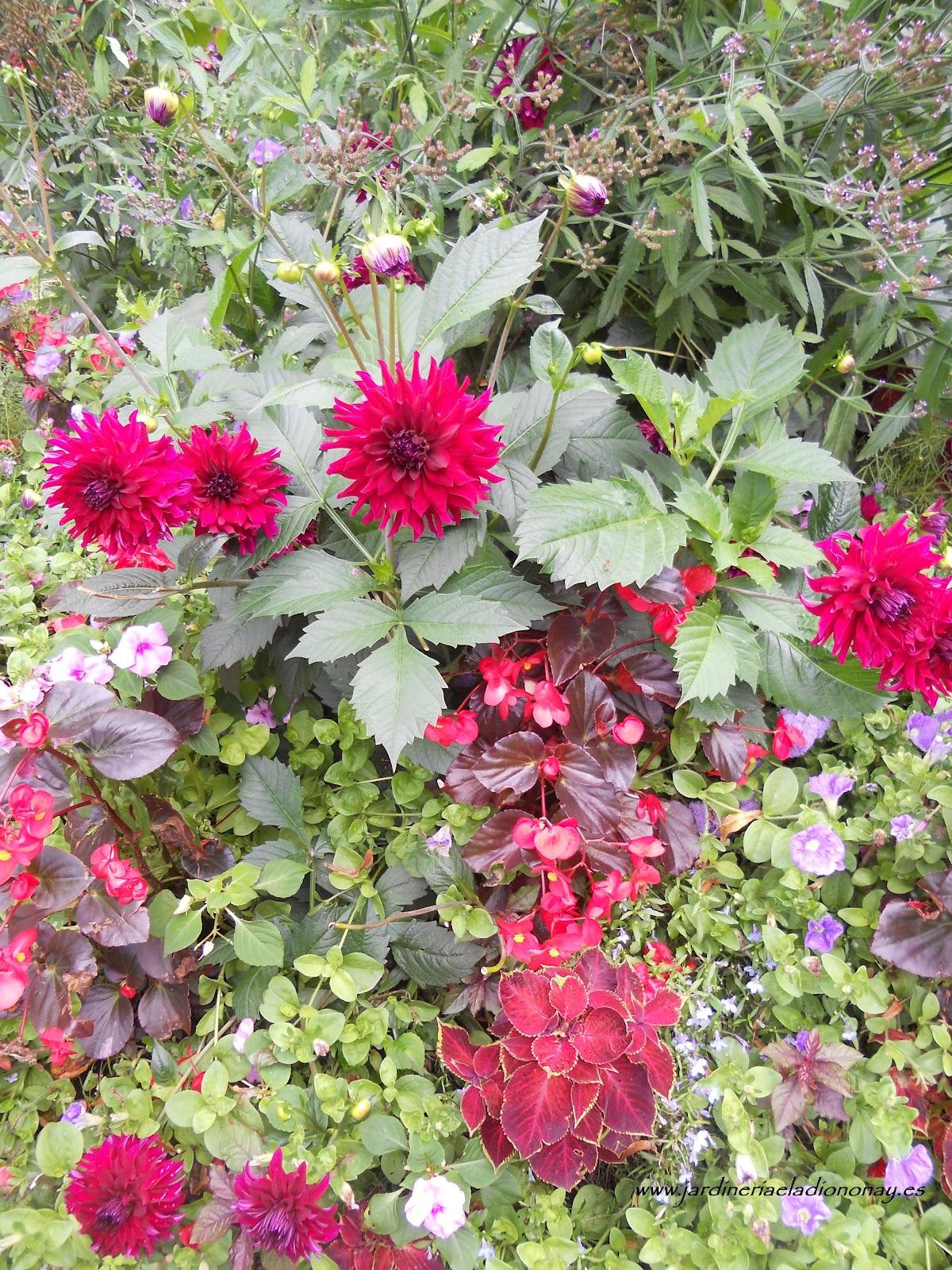 Jardineria eladio nonay cuidados especiales para los - Plantas para arriates ...