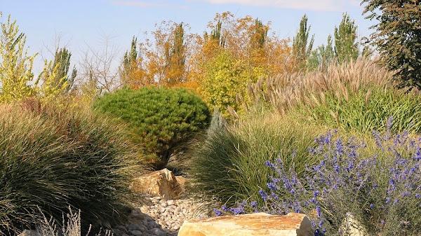 Paisajismo ingles cuidar de tus plantas es for Plantas paisajismo