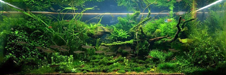 Московский растительный аквариум