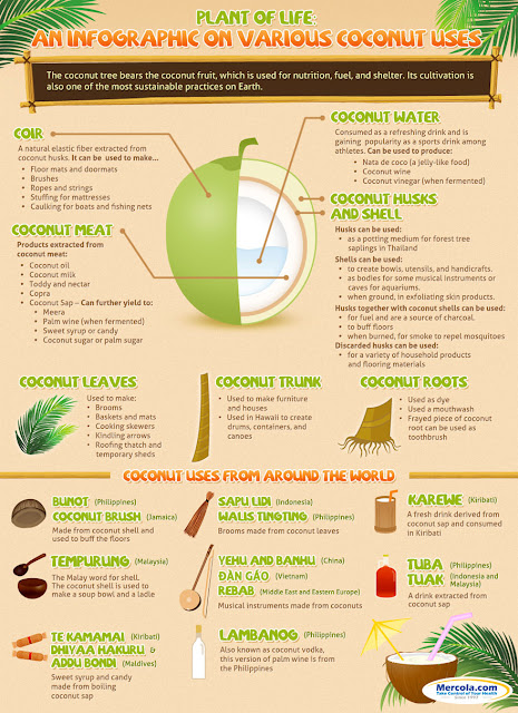 various coconut uses infographic