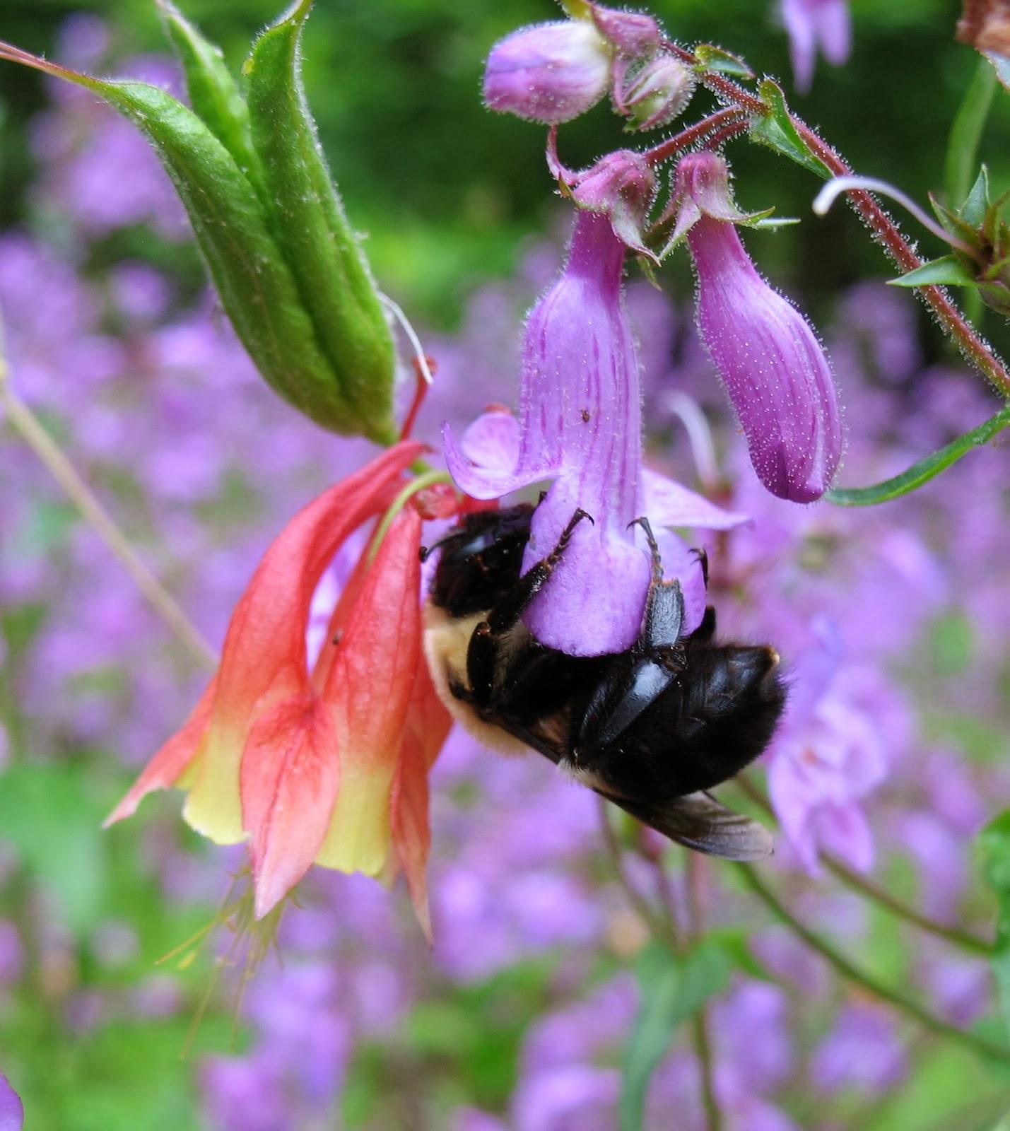 using georgia native plants  pollinators of native plants  the book