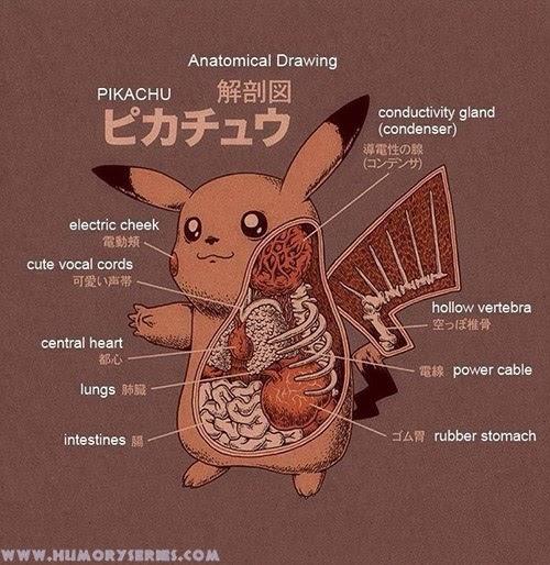 Anatomía Pikachu, Pokemon