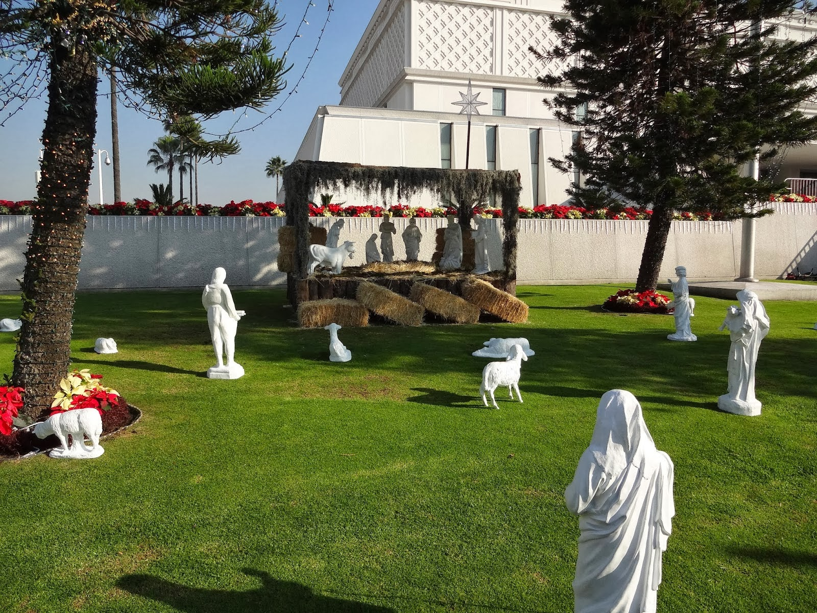 Nativity & Poinsettias on the Mexico City L D S Temple Grounds