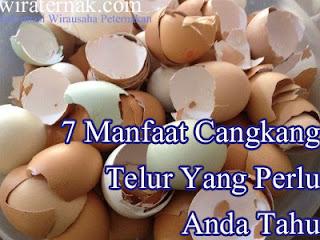 kandungan cangkang telur