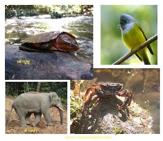 เส้นทางศึกษาธรรมชาติเขตรักษาพันธุ์สัตว์ป่าภูหลวง จ.เลย