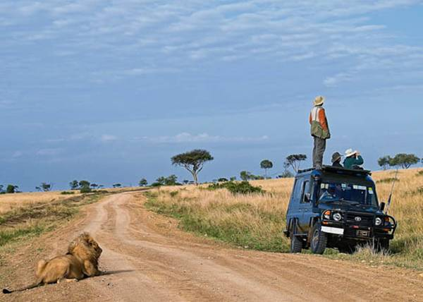 I Am On The Other Side – Lion Safari.