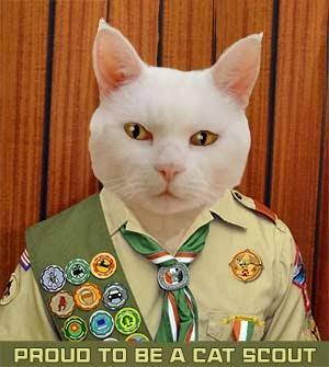 I'm a Cat Scout!