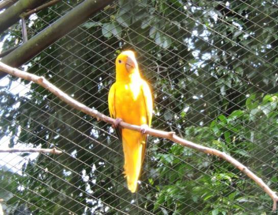Beleza dos Pássaros em Parque das Aves em Foz do Iguaçu