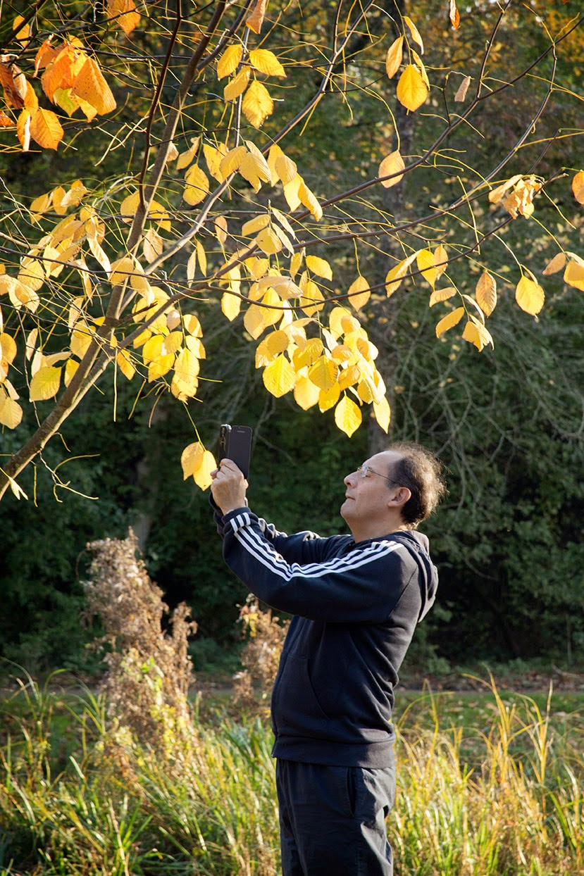 man taking picture of yellow leaves