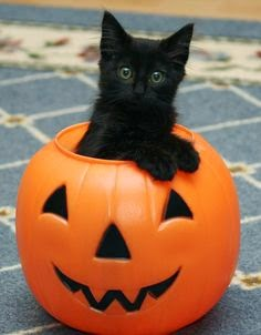 Funny halloween animals 20