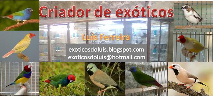 Exóticos do Luís - Braga