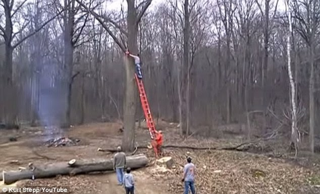 Tree Takes Revenge By Throwing Man In The Air After Being Cut
