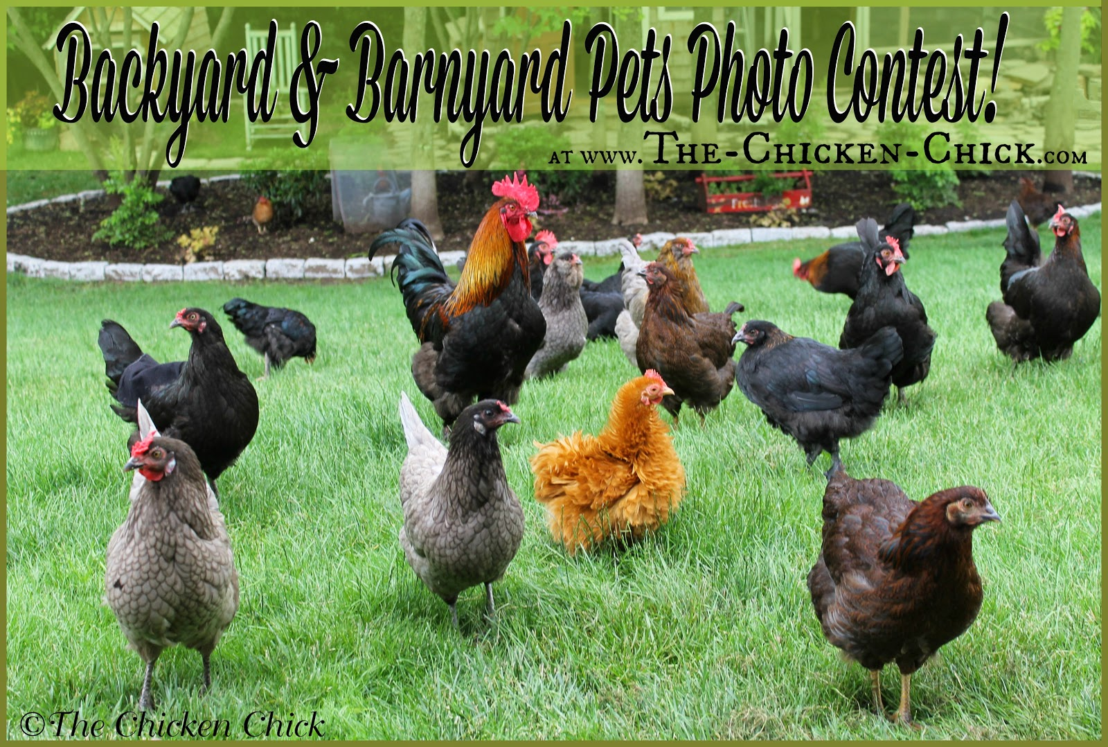 Backyard & Barnyard Pets Photo Contest Get in on the Fun!