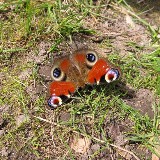бабочка, фото, butterfly