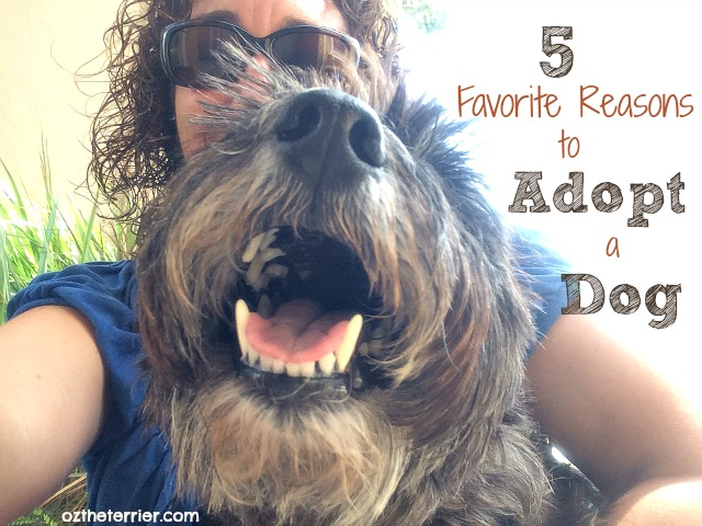 5 reasons you should adopt a dog for adopt a dog month