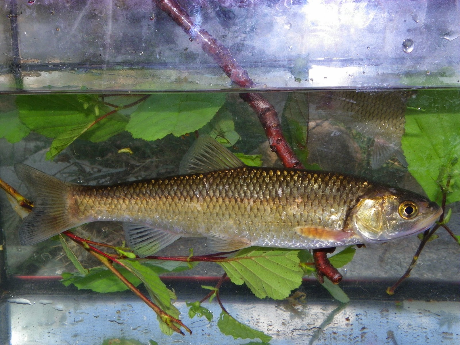 Athens nature journal natura and fishes in greece for Best community fish