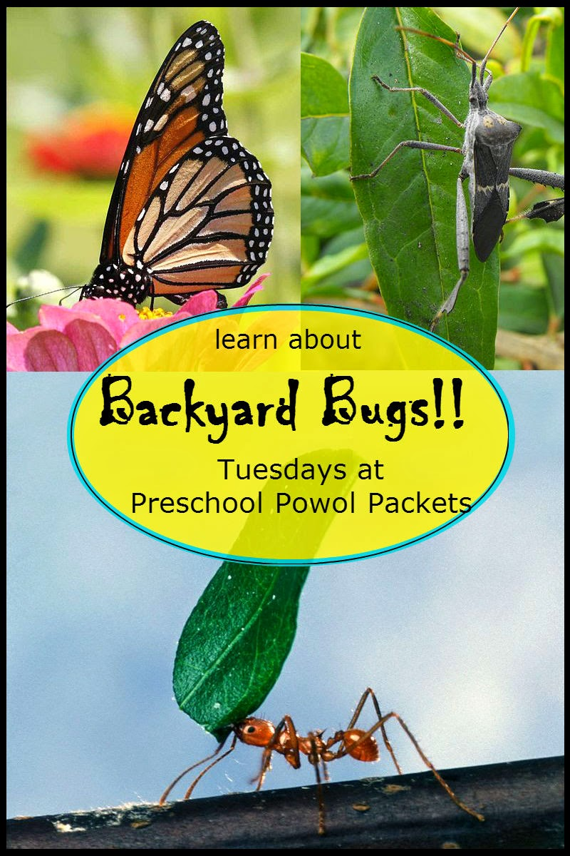 backyard bugs cicadas preschool powol packets