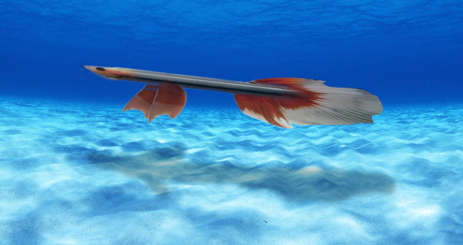 CassiopeiaTVXQ: pencil fish
