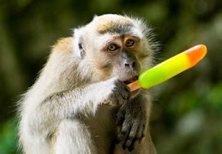 Chango comiendo paleta de hielo de frutas