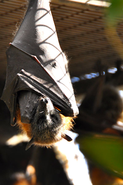 flying fox reptile park