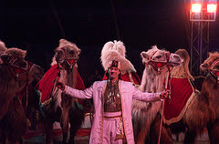 Circus: kamelen by doenietzomoeilijk via Flickr and a Creative Commons license