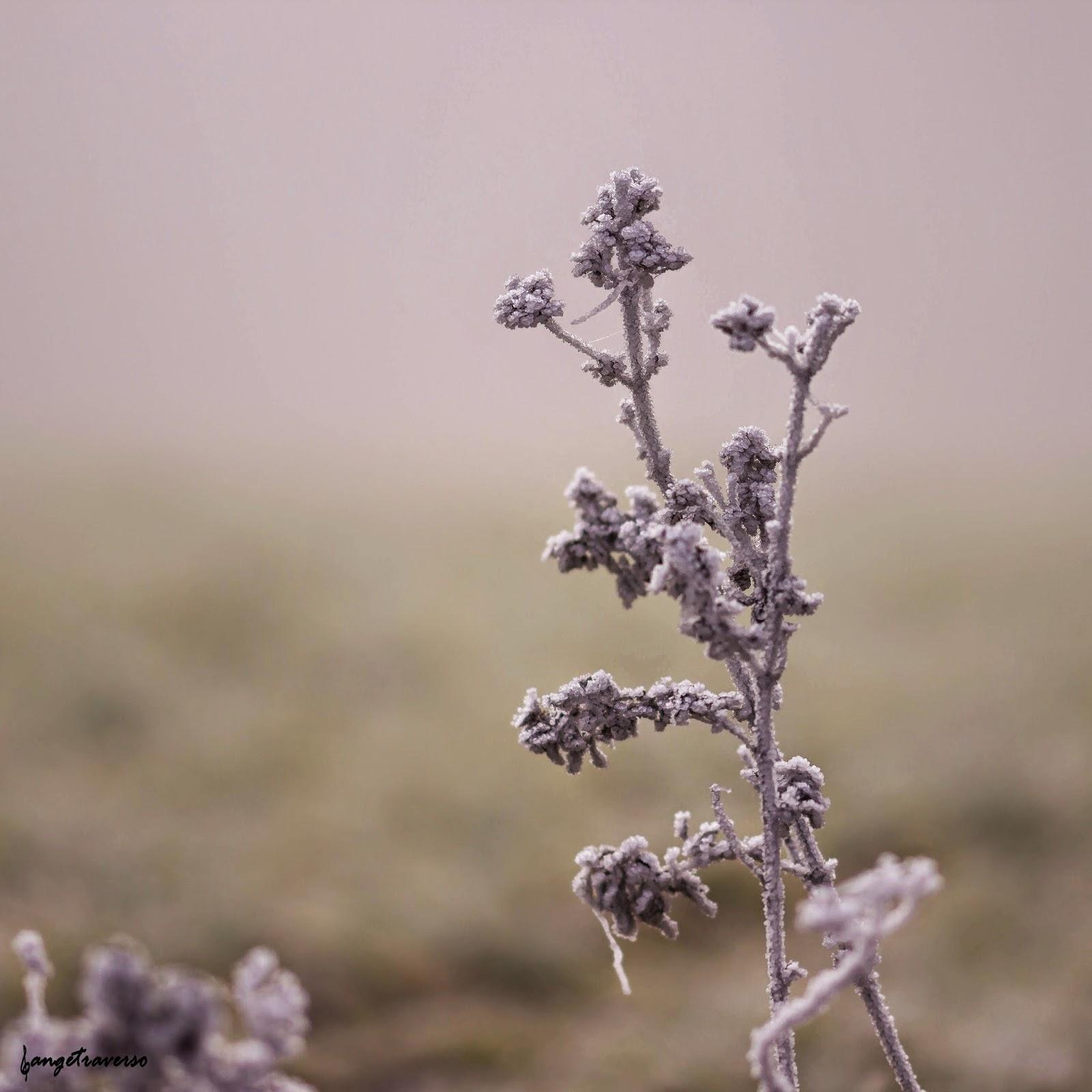 Fleur séchée couverte de givre par un matin brumeux