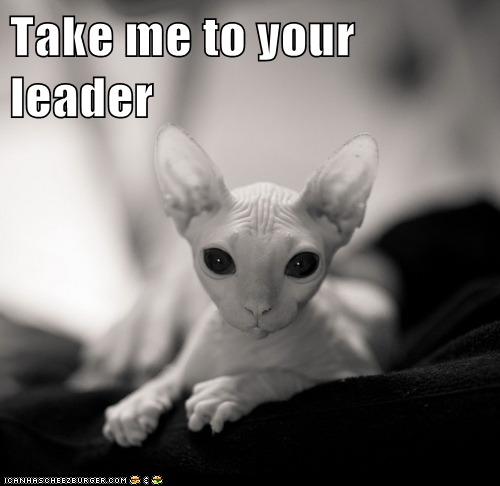 black and white photo of sphinx cat says take me to your leader