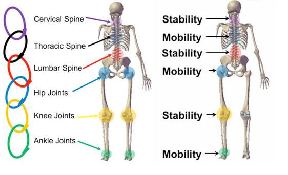 Fisioterapia: El Concepto Articulación por Articulación \