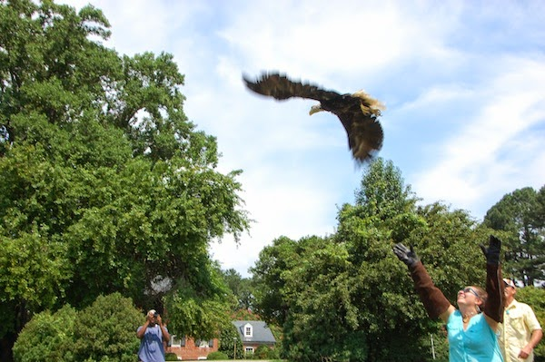 Your Heart Will Soar as This Healed Bald Eagle Flies Back Into the Wild (VIDEO)