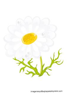 margarita con petalos blancos