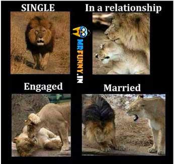 tiger-after-maariage-funny-animal-meme