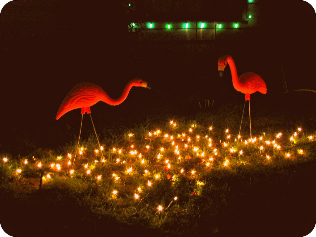 Peacock Lane Flamingos