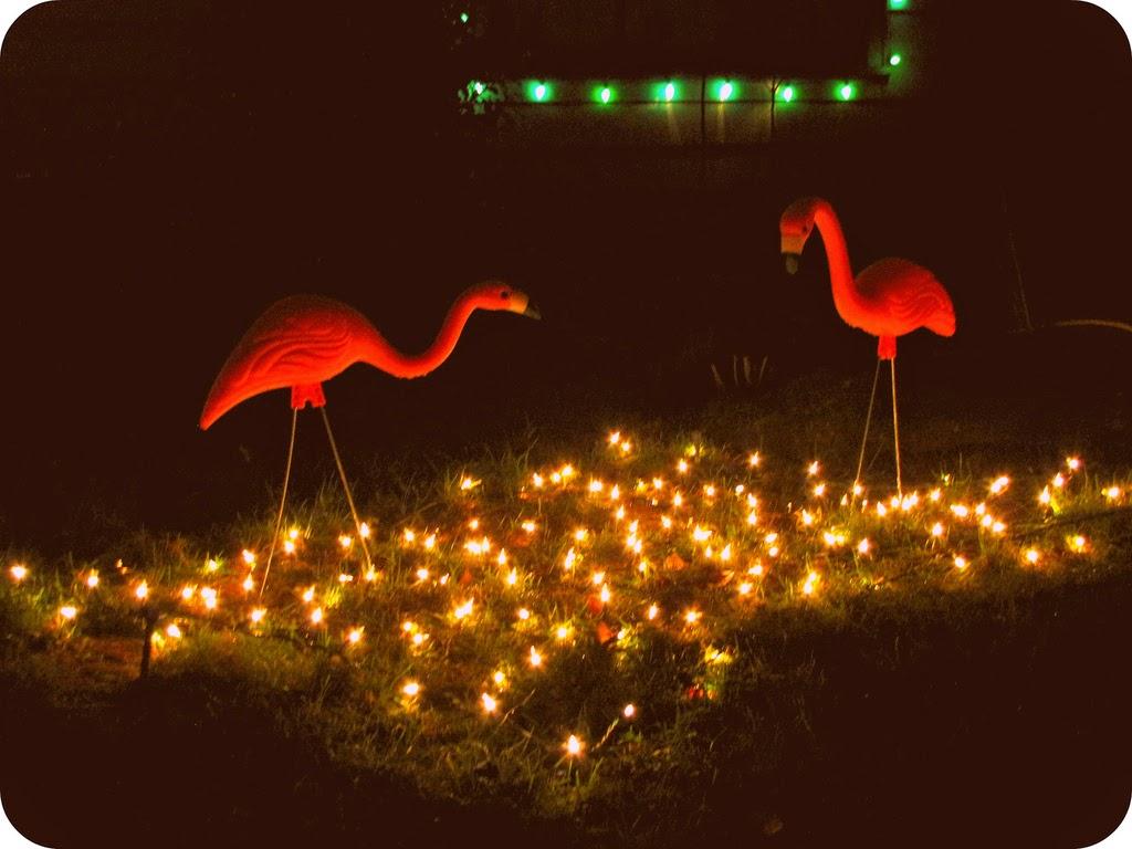 Peacock Lane Flamingos