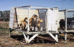 About Puppy Mill Bill...