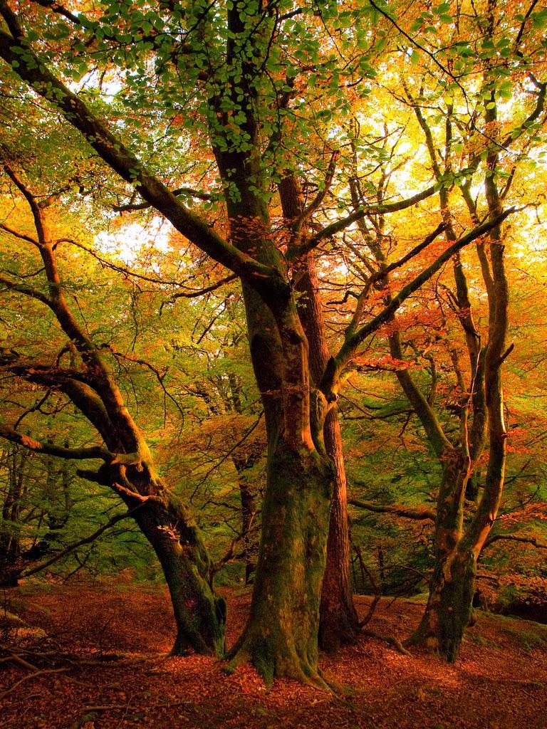 Autumn Sunset, Callander, Scotland