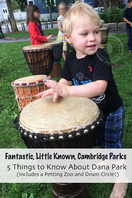 Fantastic, Little Known, Cambridge Parks - 5 Things to Know About Dana Park (Includes a Petting Zoo and Drum Circle!)