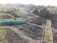 Allotment Growing - Clearing and Preparing Beds